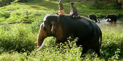 /One%20Day%20Ooty%20Pykara%20and%20Mudumalai%20Tour