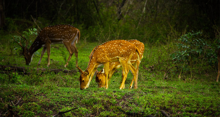 1 Day Ooty Pykara and Mudumalai Tour Local Sightseeing Package with Mudumalai Wildlife Sanctuary