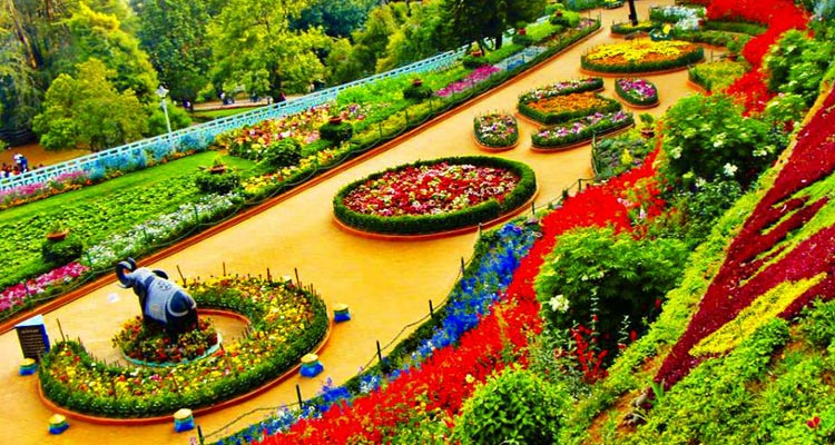 1 Day Ooty Town Tour Local Sightseeing Package with Rose Garden