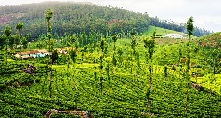 1 Day Ooty Town Tour Local Sightseeing Package