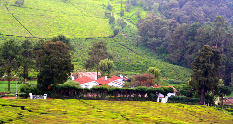 1 Day Ooty Trip from Mysore Tour Local Package