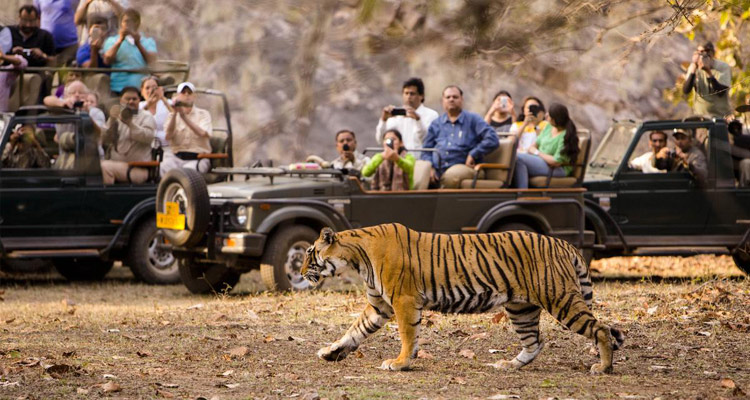 1 Day Ooty Trip from Mysore Tour Package with Mudumalai National Park